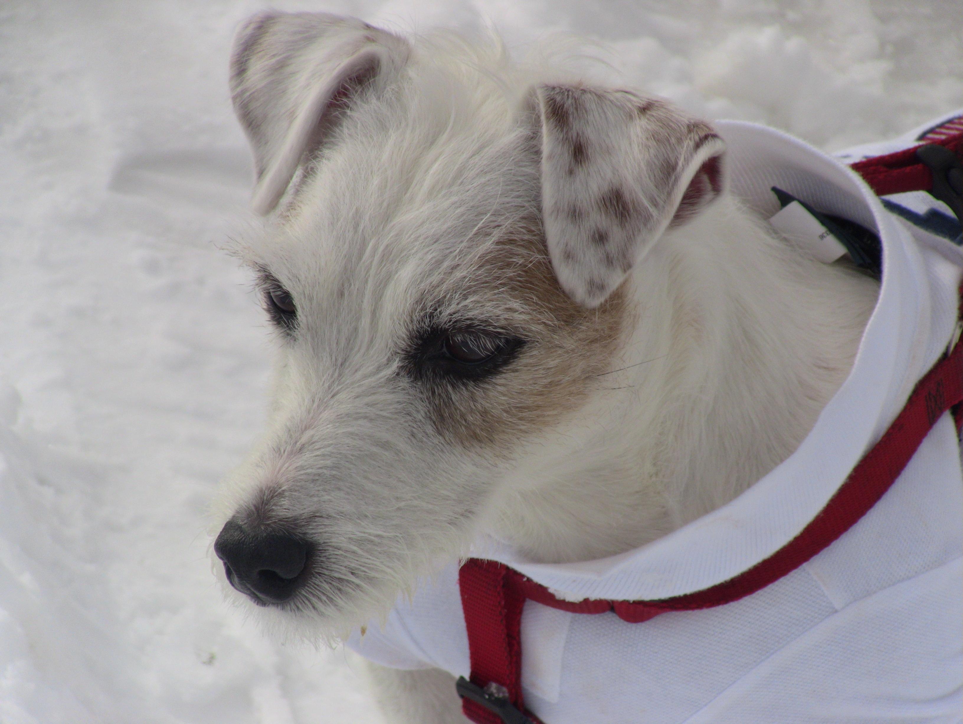 Dog photo's-img_0240.jpg