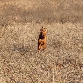 Dog photo's-img_0776.jpg